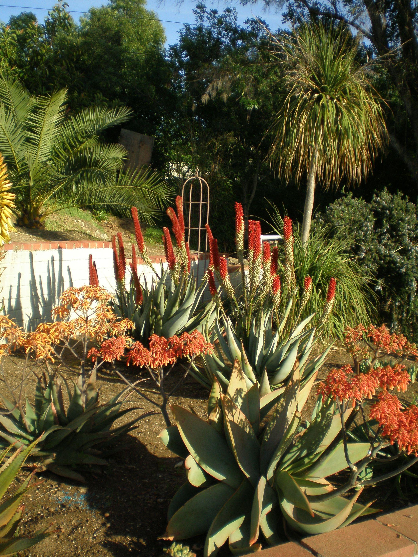 My Aloe Garden Succulent seeds, African plants, Pretty