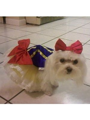 269f803db89 39 Adorable Pet Halloween Costumes That'll Melt Your Heart ...