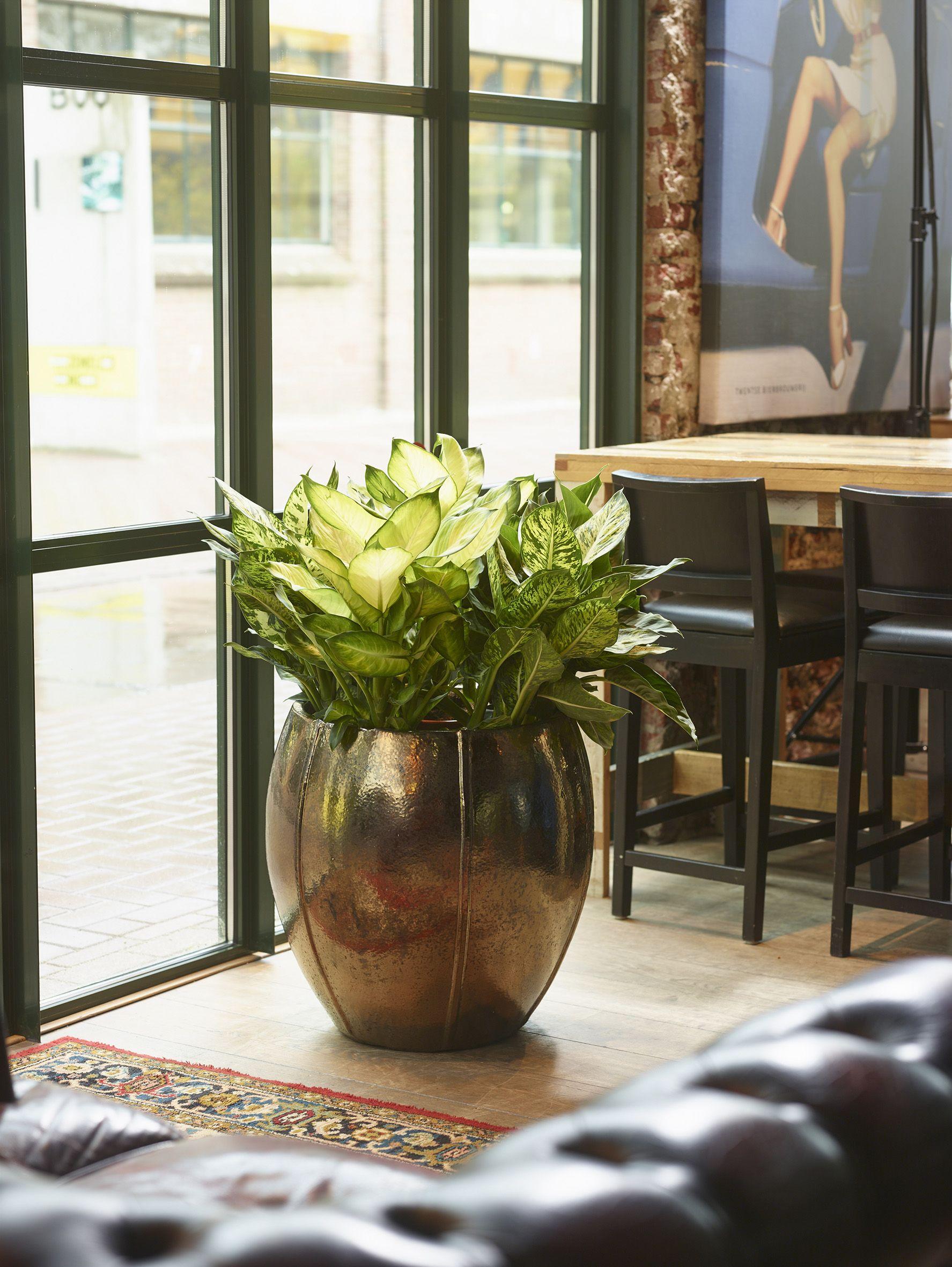 hangende plantenbak binnen best mica decorations hangende pot