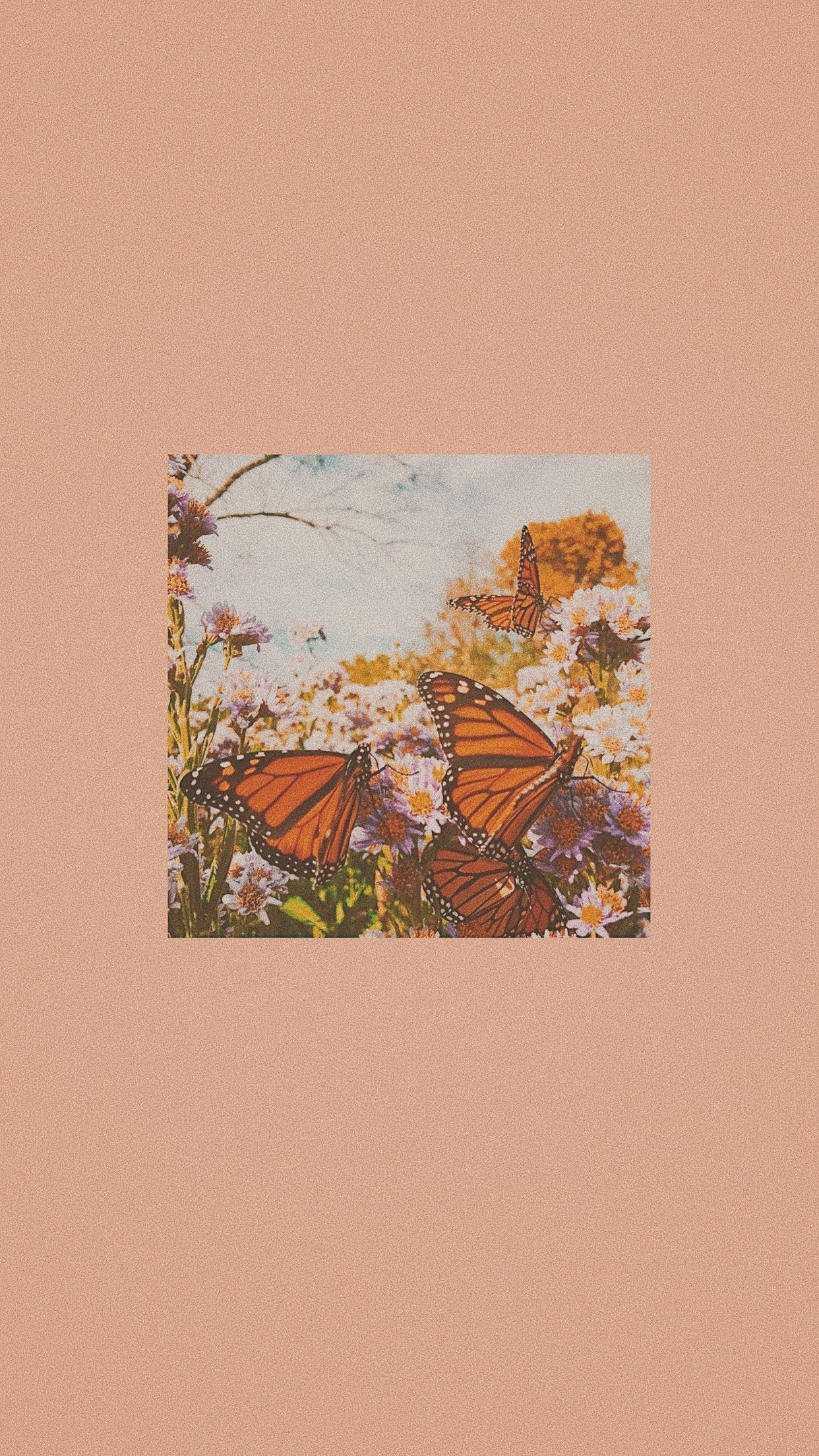 Peachy Butterfly Aesthetic Iphone Wallpaper Butterfly