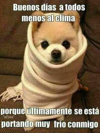Buenos Dia Adormi Otra Vez Animales Bonitos Animales Bebes Buenos Dias Perros
