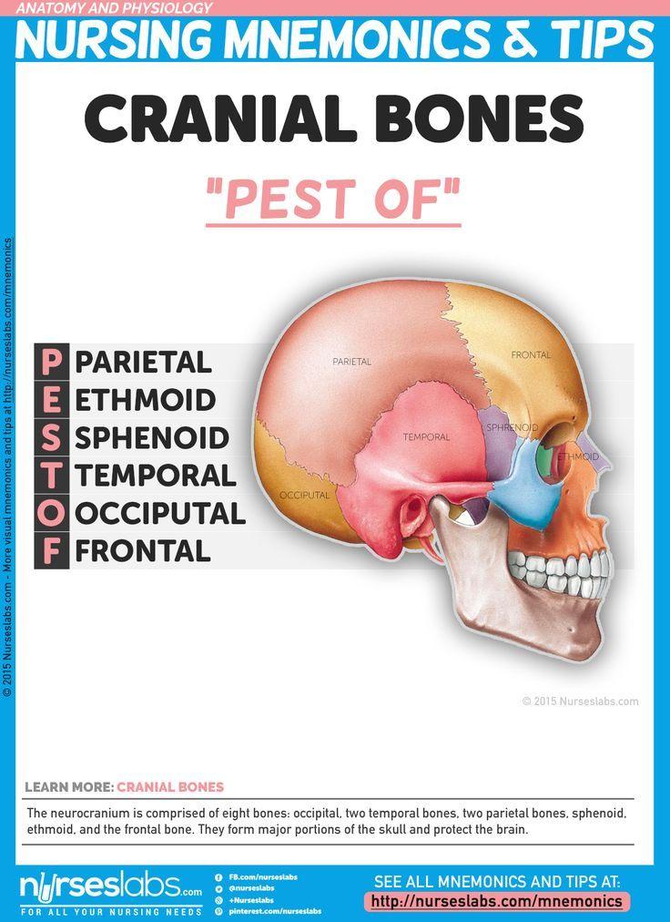 anatomy and physiology nursing mnemonics & tips | nursing mnemonics, Human Body
