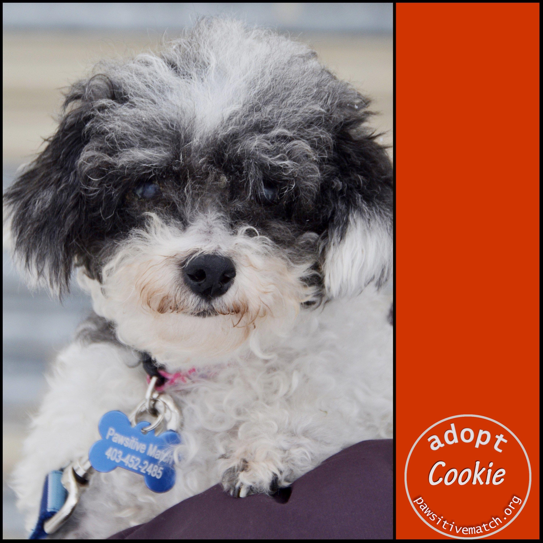Take Me Home Thursdays Rescue Animals Of The Week Dog Adoption Animals Animal Rescue