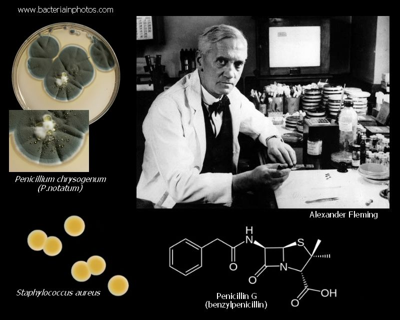 Alexander Fleming And Penicillin With Images Penicillin