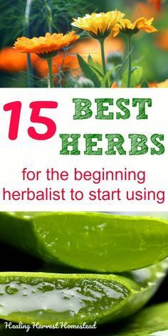Best Herbs for the Beginning Herbalist (Which Herbs Should You Start Using First?) There are hundreds of herbs the beginning herbalist can use for home remedies. The number is overwhelming! Here are my best herbs for the beginner herbalist to start using to create a home apothecary. How to make your own remedies and get natural hea