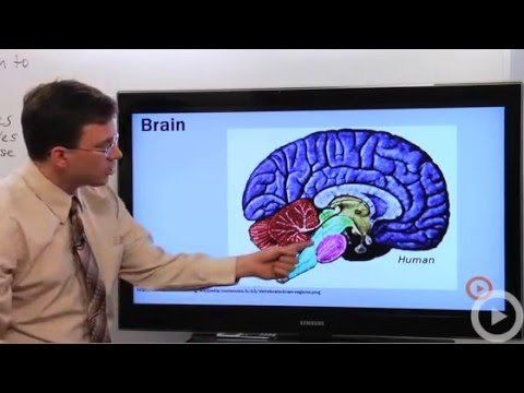 OpenEd Resource: Nervous System - YouTube