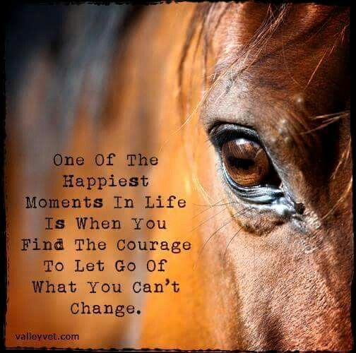Pin By Lou Purchase On Valley Vet Supply Quotes