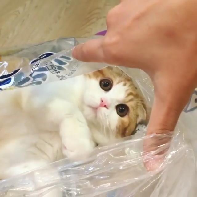 Cats Cutecat Lovelycats Kittens Cutekittens Furbaby