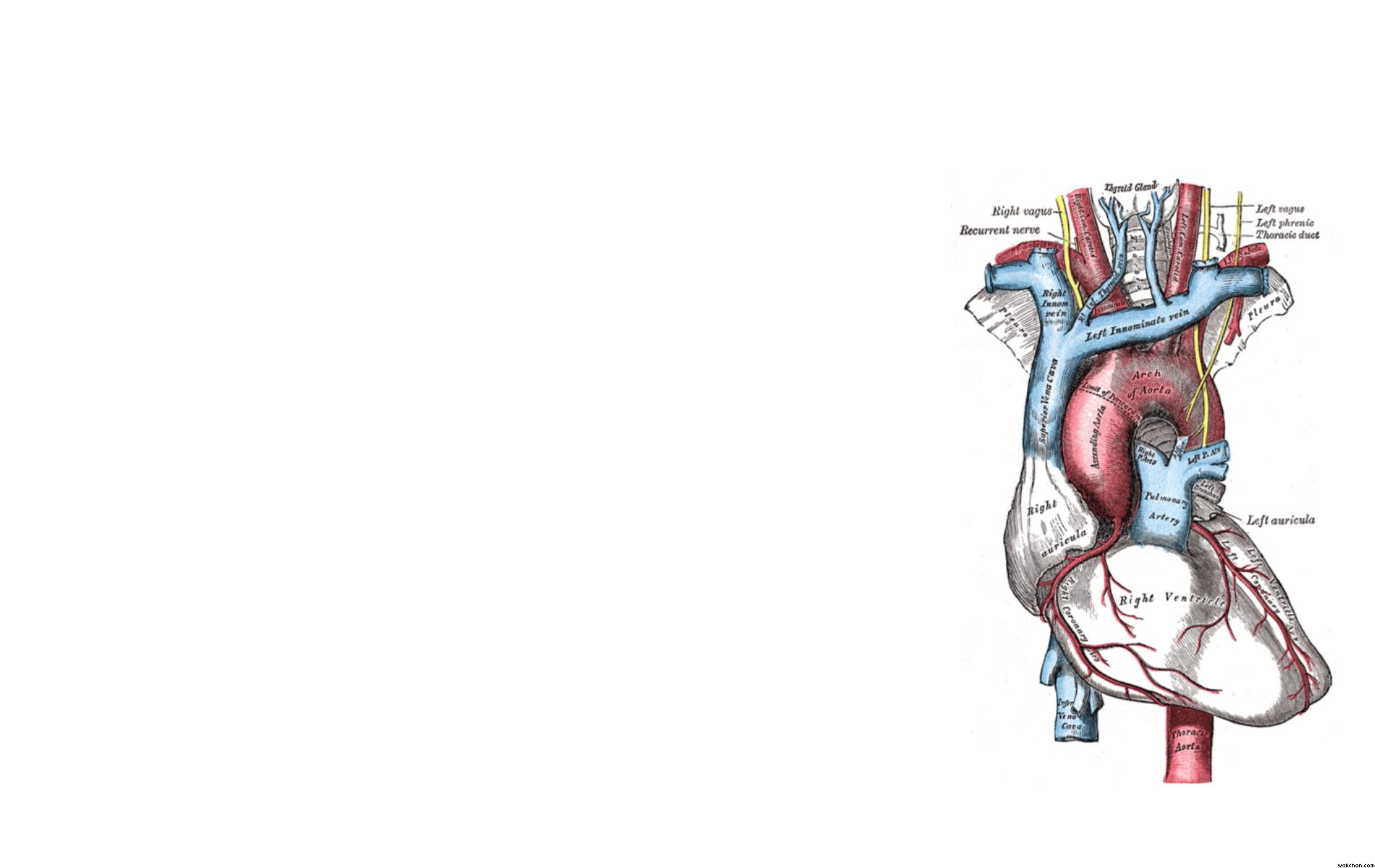 Grays Anatomy Heart x | Trust me, I`m a biologist | Pinterest ...