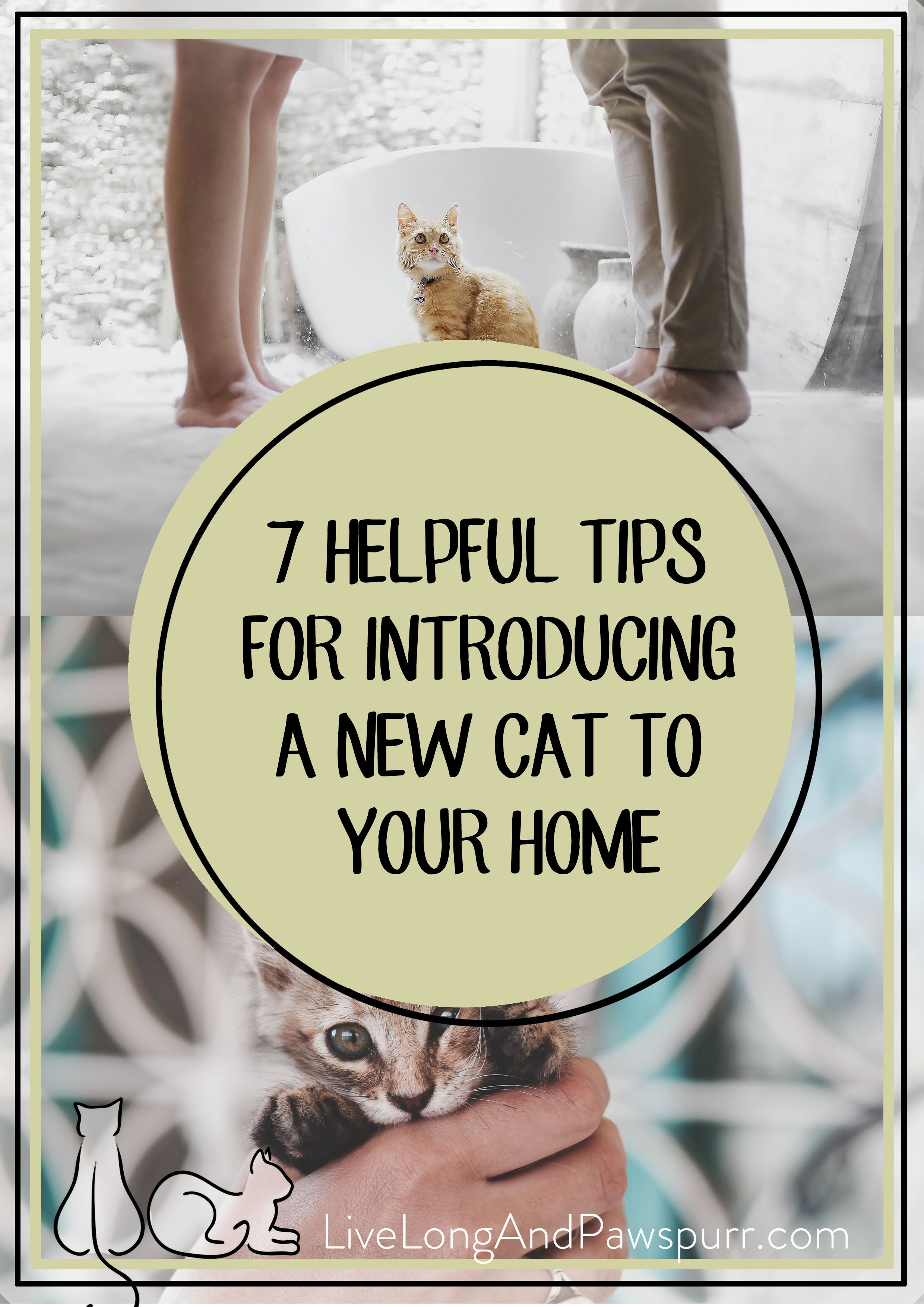 7 Helpful Tips For Introducing A New Kitten To Your Home Live Long And Pawspurr Introducing A New Cat Cat Training Sick Cat
