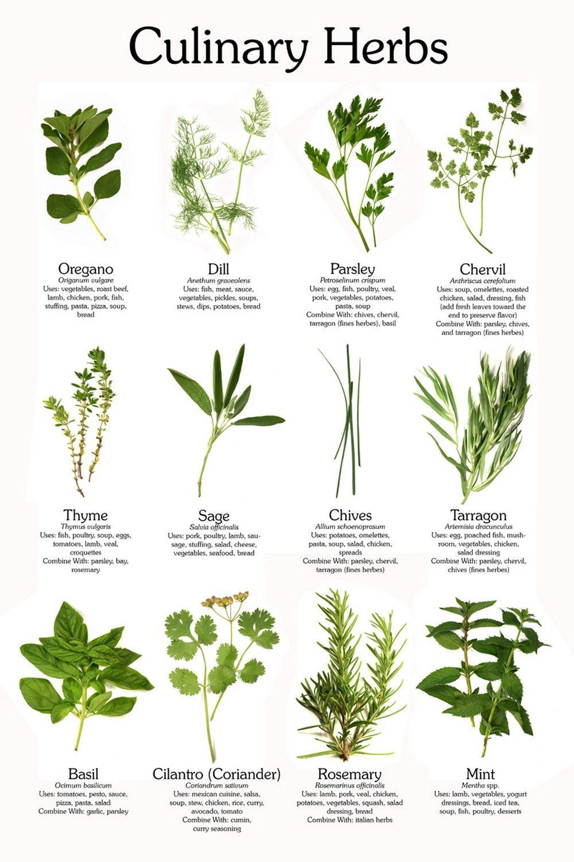 culinaryherbposter Herbs, Medicinal herbs, Types of herbs