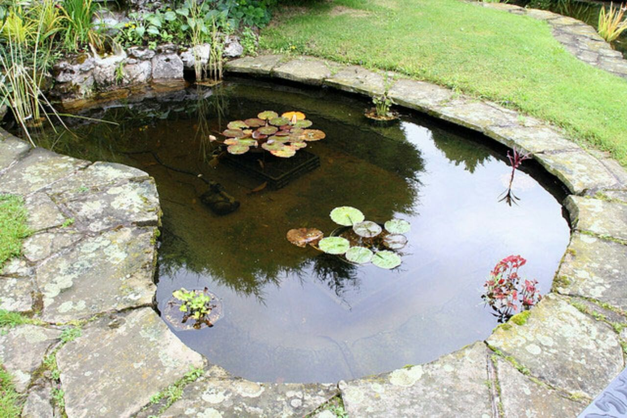 Trout Fish Farm Skardu Ponds for small gardens