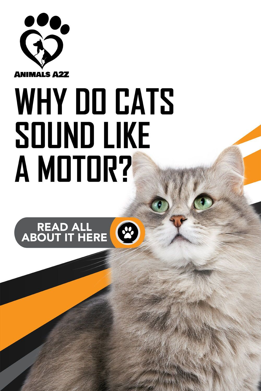 Why do cats sound like a motor? Cat facts! in 2020 Cat
