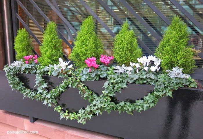 Paisaje libre composiciones de plantas para jardineras en for Planta arbustos para jardineras