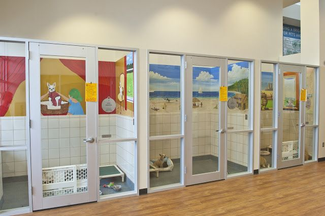 Cat Rooms For Shelters Google Search Dog Kennel Dog Hotel Dog Boarding Facility
