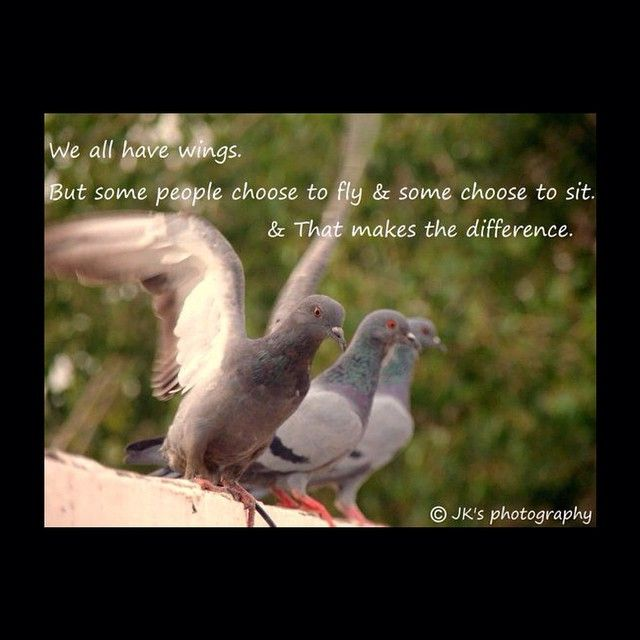 I choose to fly!