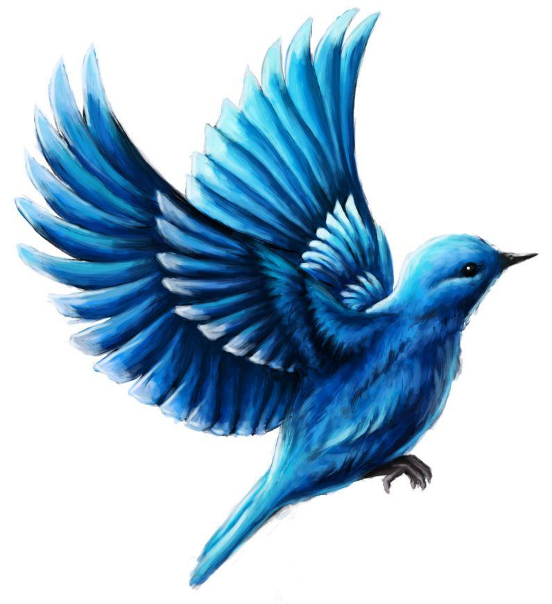 Illustration Buchcover Buchillustration Der Blaue Vogel Von Quigunaja Illustrator Andrea Baitz Eckernforde Schlesw Illustration Blauer Vogel Illustrator
