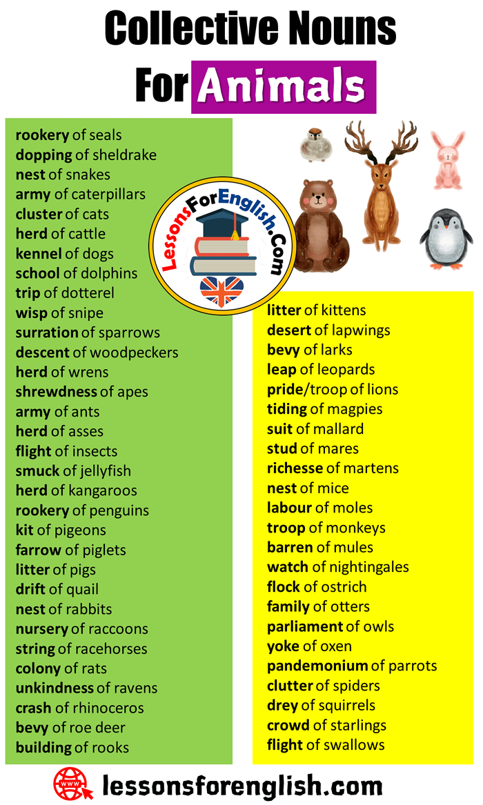 English Collective Nouns list, Collective Nouns For