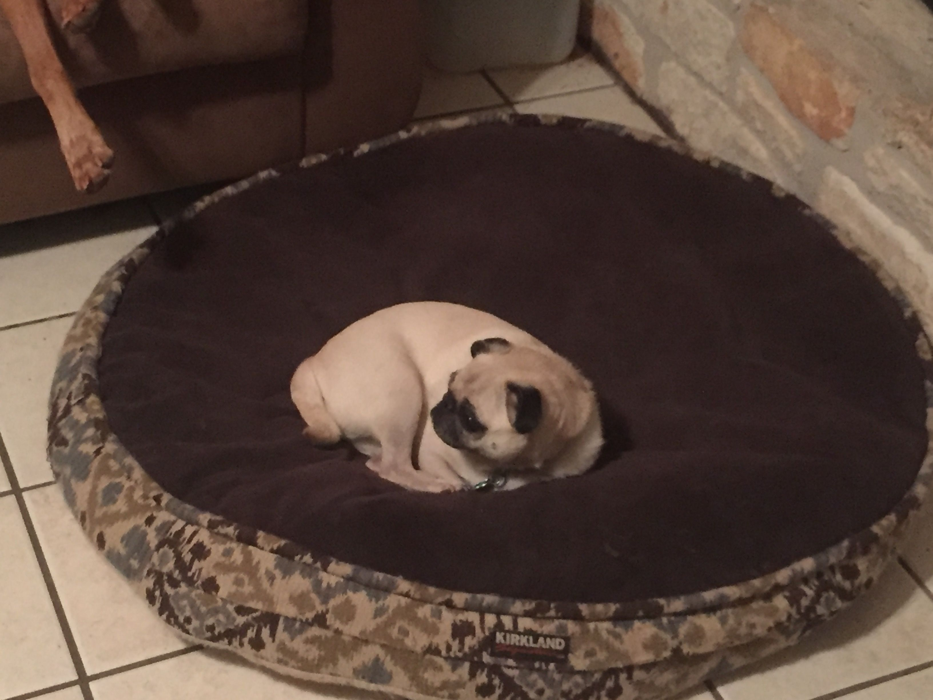 Because I Deserve The Biggest Dog Bed That S Why Big Dog Beds