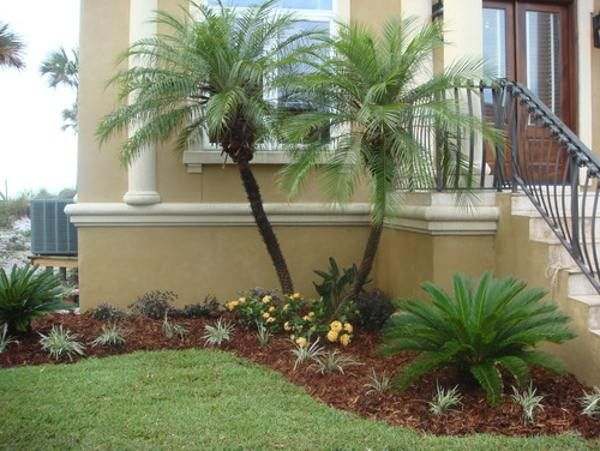 Small Palm Trees Types For Landscaping Free Reference Images Front Yard Landscaping Design Small Front Yard Landscaping Desert Landscape Design