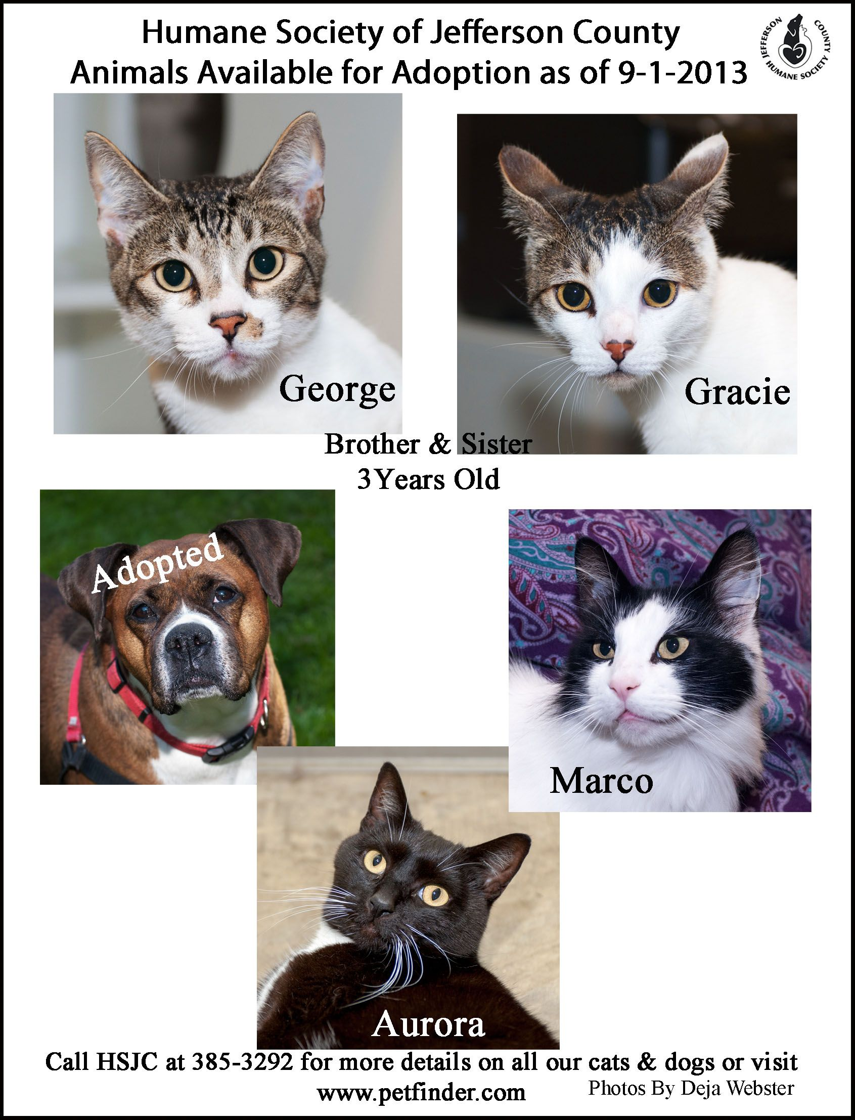 The Latest Poster Of Animals Available For Adoption From The Humane Society Of Jefferson County In Port Townsend Humane Society Port Townsend Jefferson County