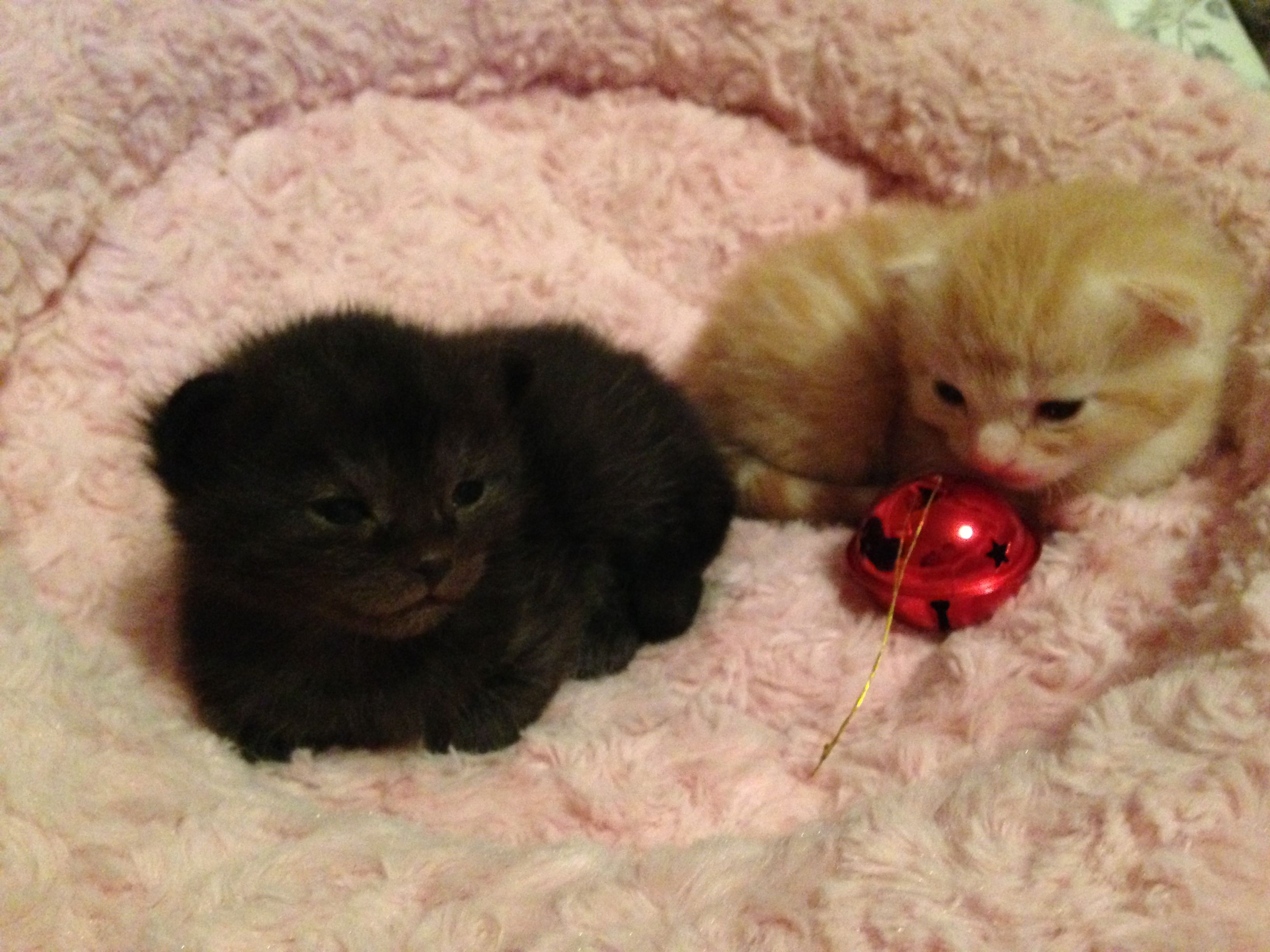 Emily's kittens! Play PetRescueSaga now >