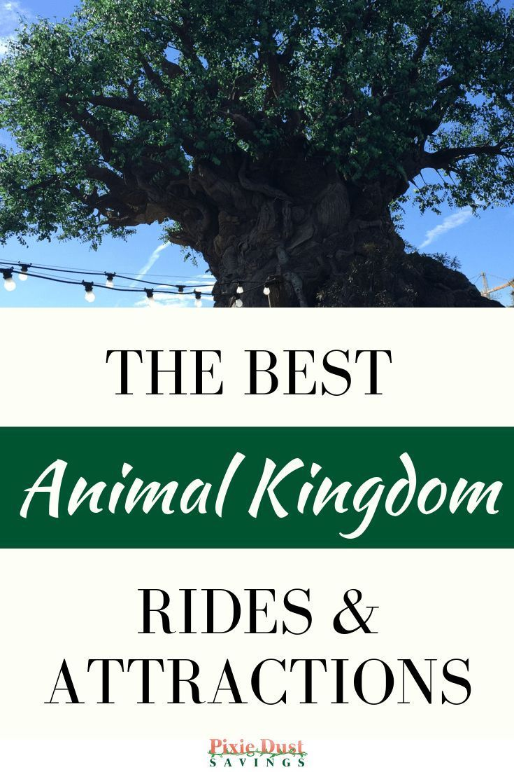Don't miss these Animal Kingdom Attractions at Disney World! #animalkingdom
