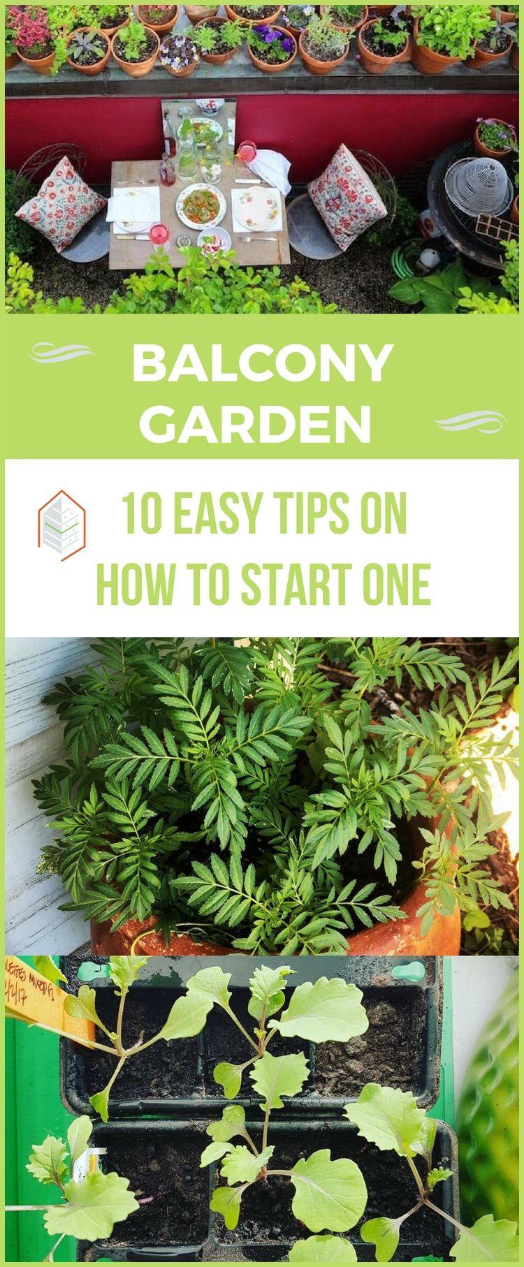 Photo of Balcony Garden: 10 Easy Tips on How to Start One