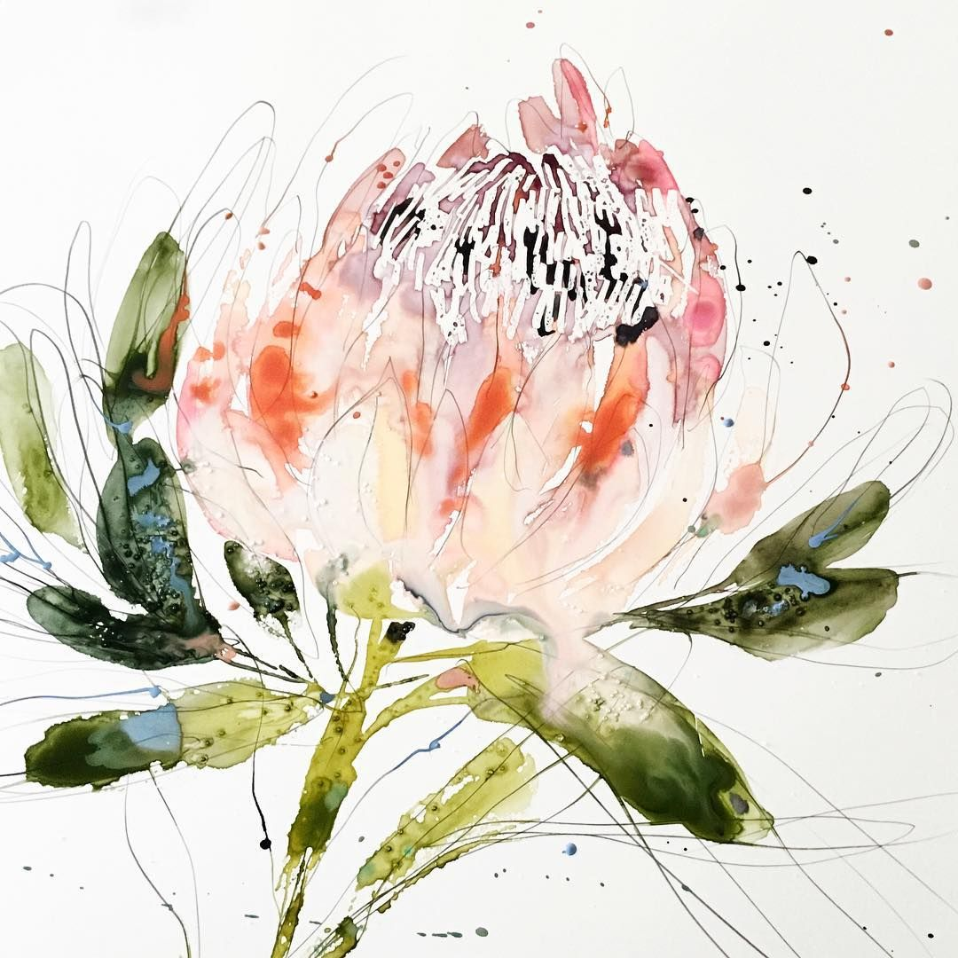 Researching Flowers For An Upcoming Project And Learned That The King Protea Represents Hope Beautiful Flower And Meaning Protea Art
