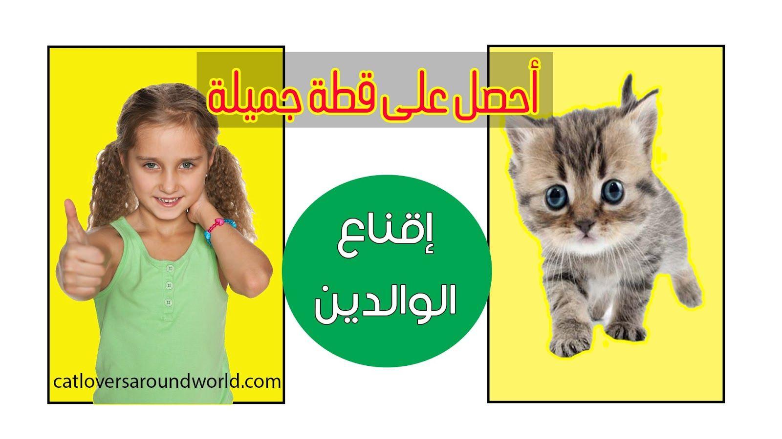 كيف تقنع والديك بشراء قطة إقناع الأهل بطرق مجربة Cats Playbill