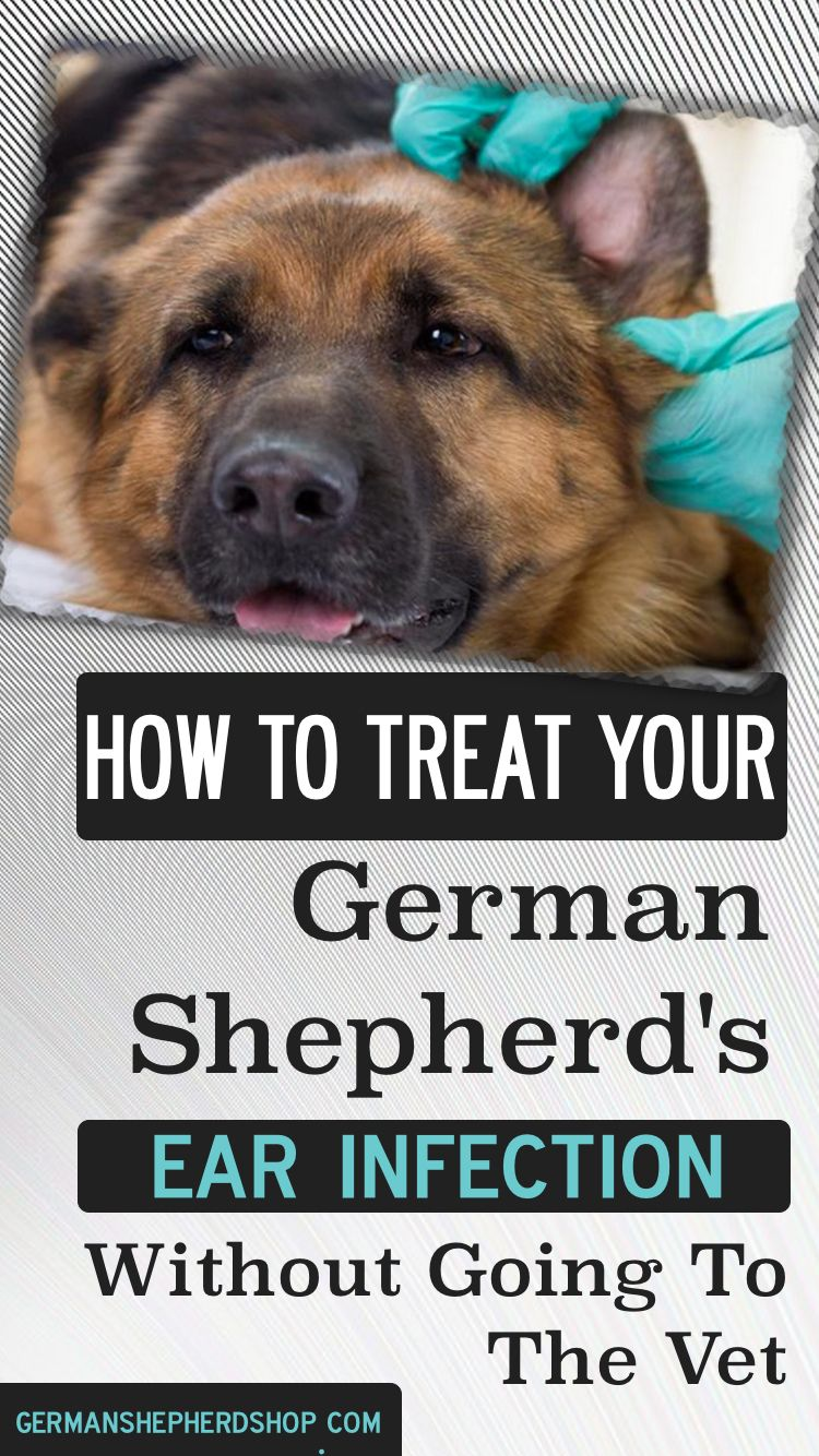 How To Treat Your German Shepherd S Ear Infection Without Going To
