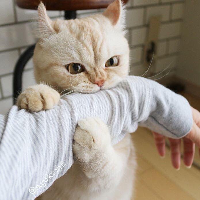 11 ทว ตเตอร แมวบ า ล กแมว แมวตลก