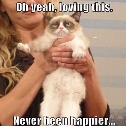 My Happiness Is Unmeasurable Grumpy Cat Meme Grumpy Cat Valentines Grumpy Cat