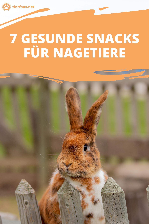 7 Gesunde Snacks Fur Nagetiere In 2020 Tiere Nagetiere Tier Fakten