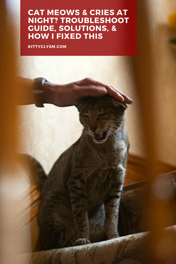 Cat Meows & Cries at Night? Troubleshoot Guide, Solutions