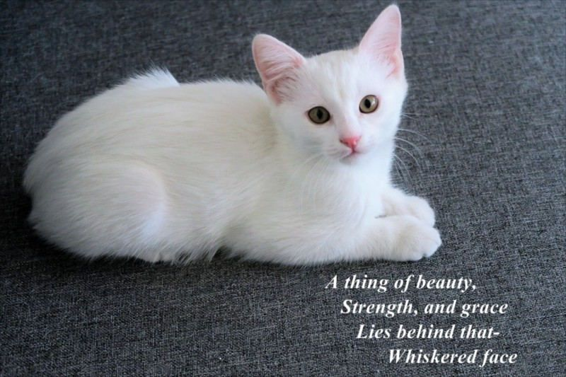 A Thing Of Beauty Strength And Grace Lies Behind That Whiskered Face By A J Cronin In 2020 Cute Cats And Dogs Cute Animals Animals