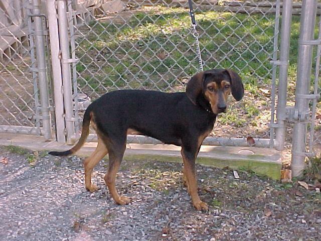 Adopt Jewel On Petfinder Animals Dog Adoption Animal Rescue