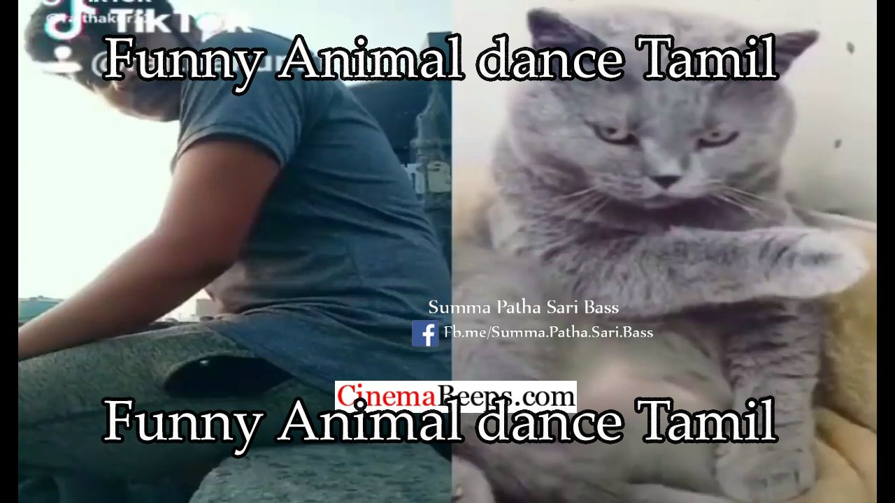 Funny+Animal+dance+Tamil+Songs Dancing animals, Funny