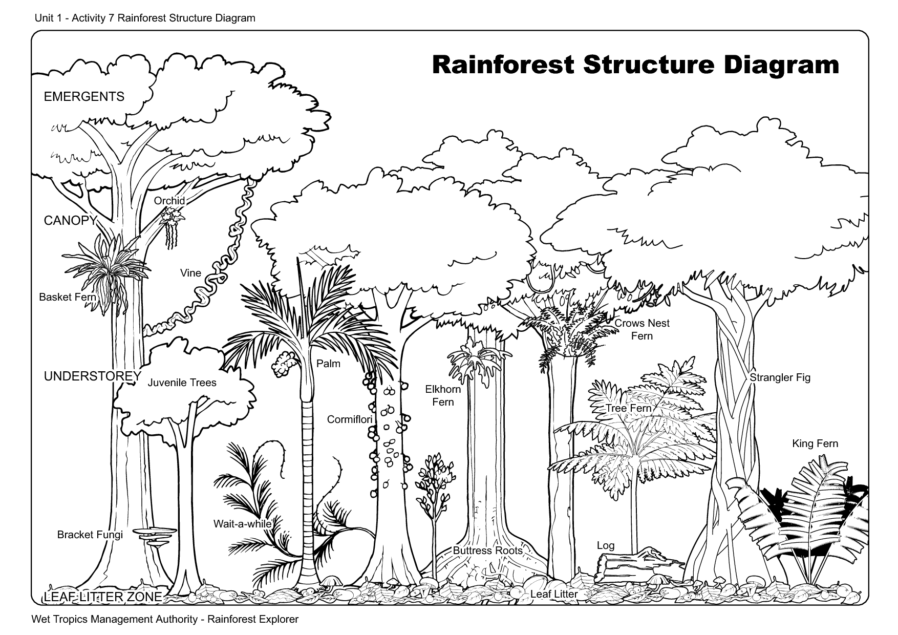 Worksheets Layers Of The Rainforest Worksheet how to draw forest plants bing images daintree rain rainforest map ecosystem project