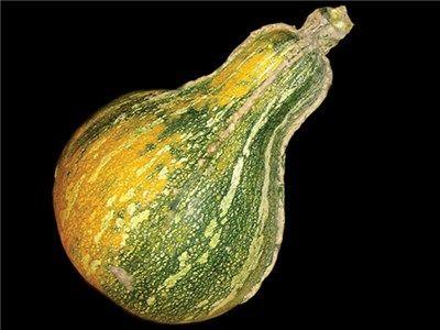 Vegetable 25 seeds Pumpkin Cushaw White