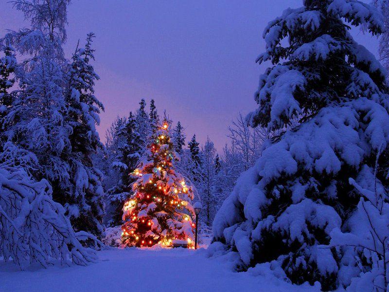 sneeuw met verlichte kerstboom | Inspiraties | Pinterest