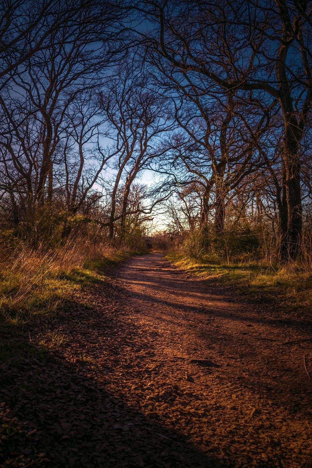 On my way home Arbor Hills Nature Preserve in Carrollton