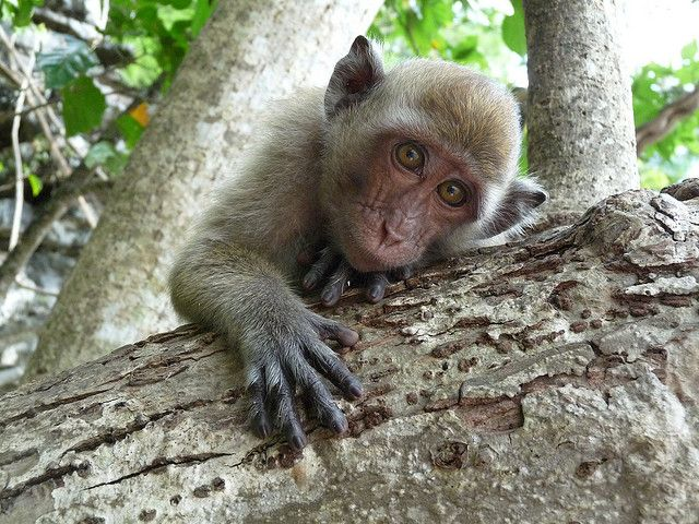 Cheeky Thai monkey by colleenmarples, via Flickr