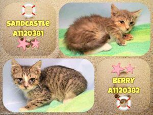 Sandcastle A1120381 And Berry A1120382