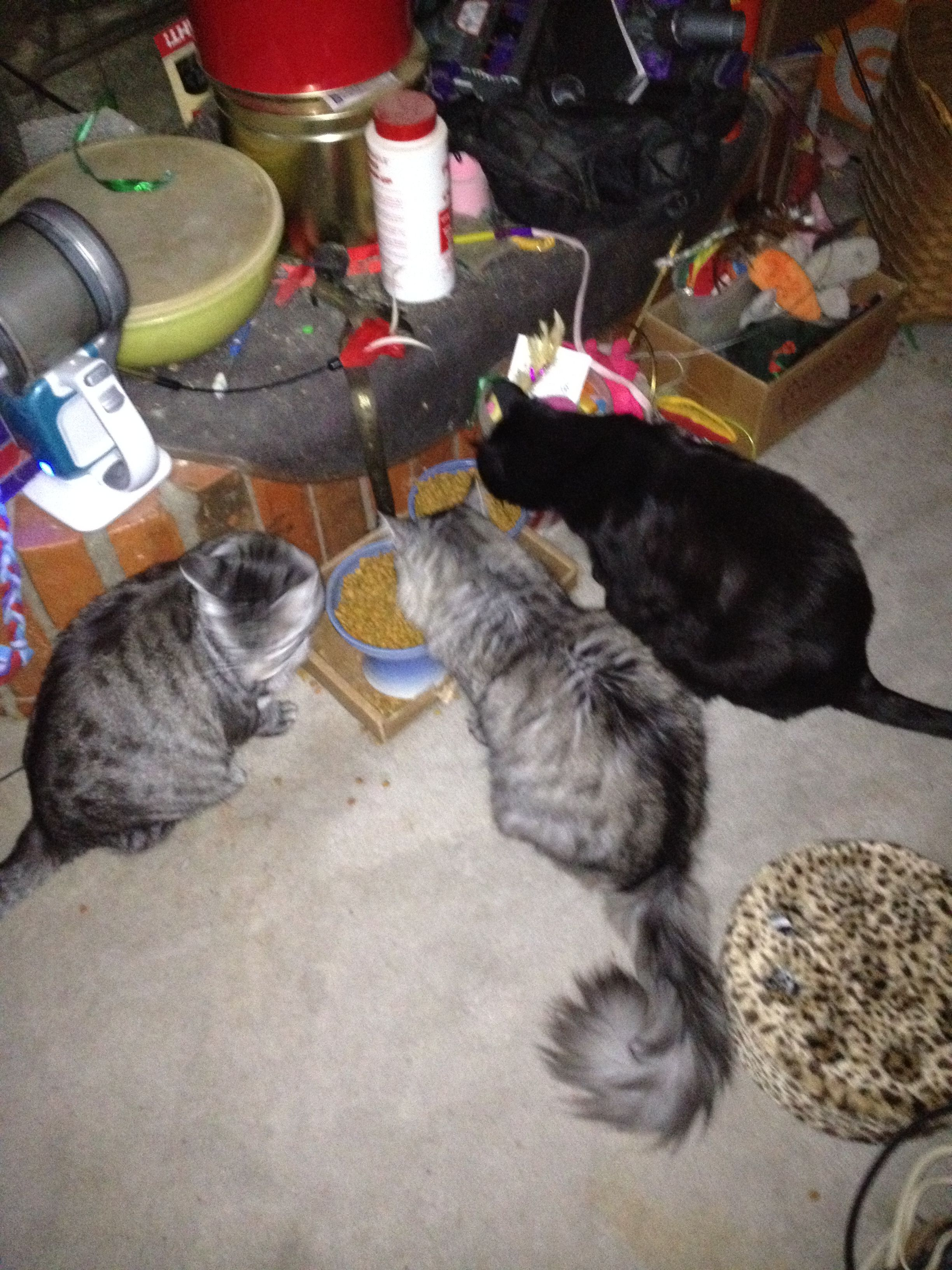 Feeding Time Cats And Kittens Kittens Animals