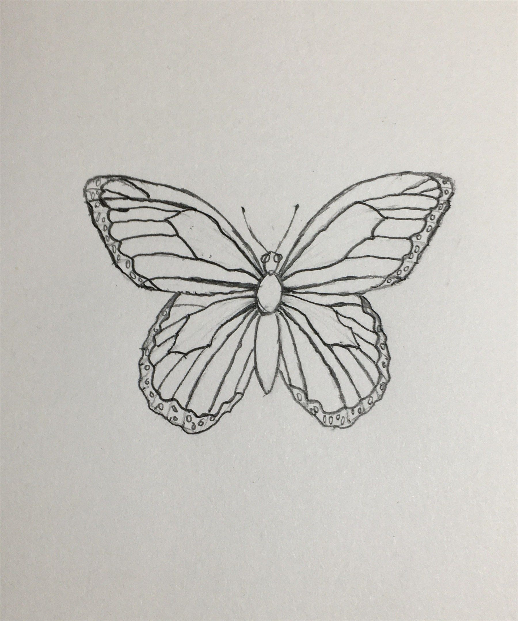 37ae0ece0d118b65382bb01e555799c9 » Butterfly Drawing Aesthetic