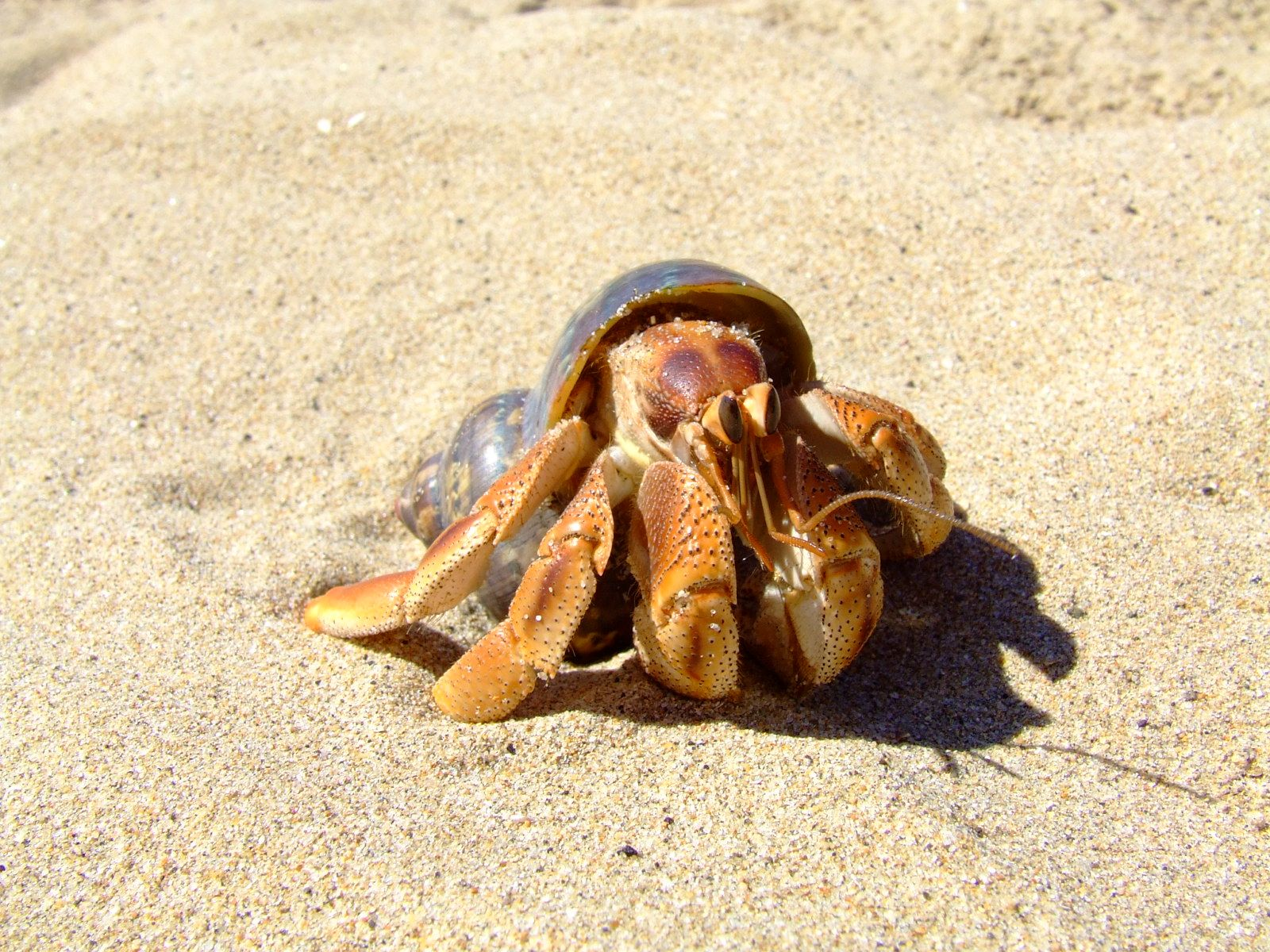 Image result for hermit crab | Product Design Humid/Arid | Pinterest ...