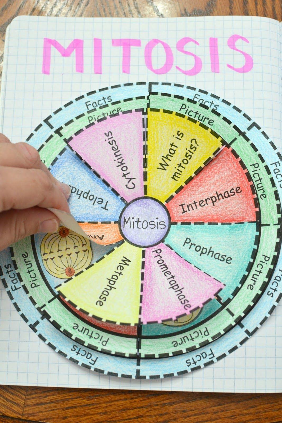Venn Diagram Templates  Teaching Ideas