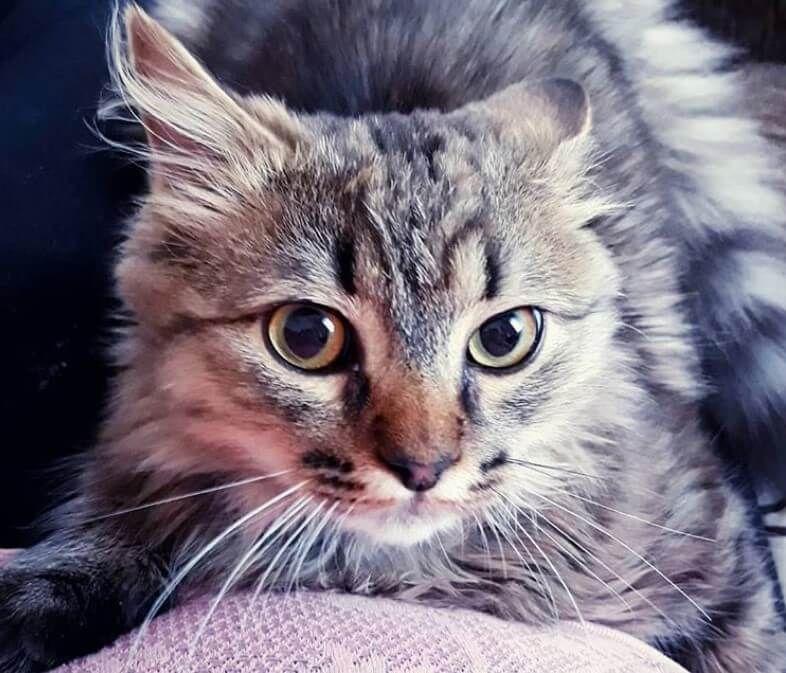 180 Historical Cat Names Cat names, Cats, Boy cat names