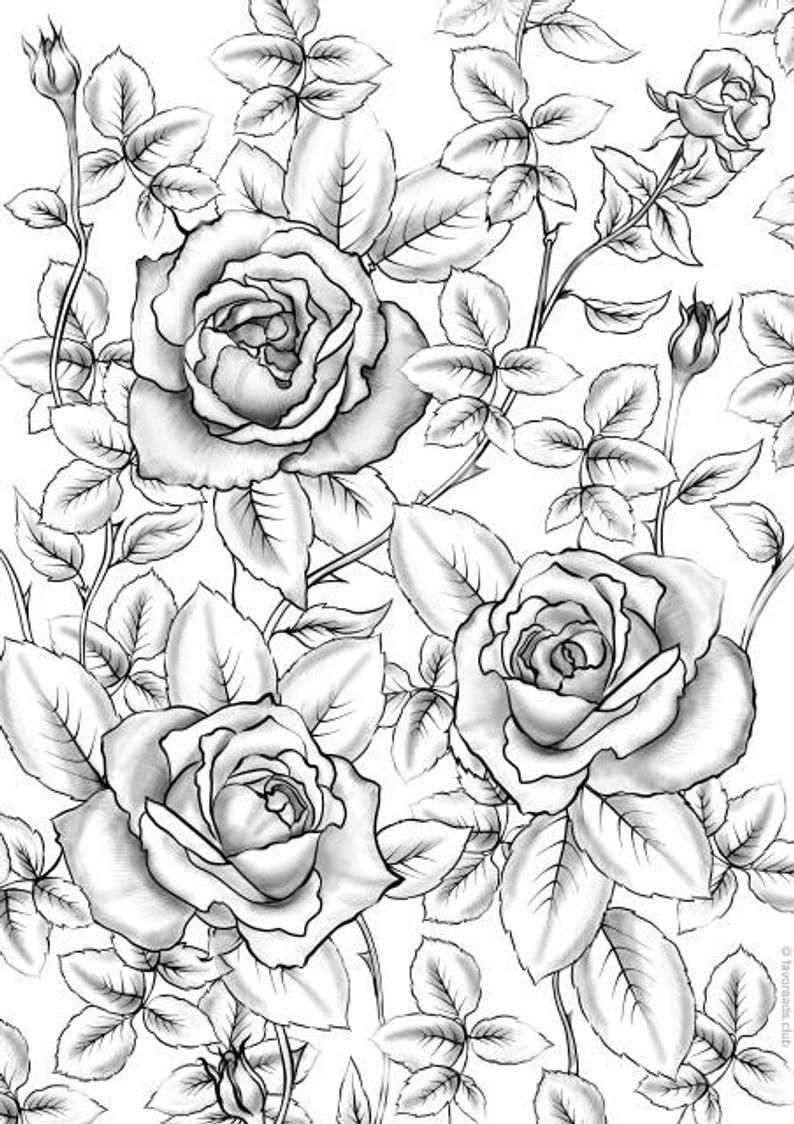 Roses Printable Adult Coloring Page From Favoreads Coloring Etsy In 2020 Rose Coloring Pages Free Adult Coloring Pages Flower Coloring Pages